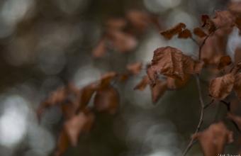 LAVA_Photography-2