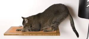 cat_floor_scratch