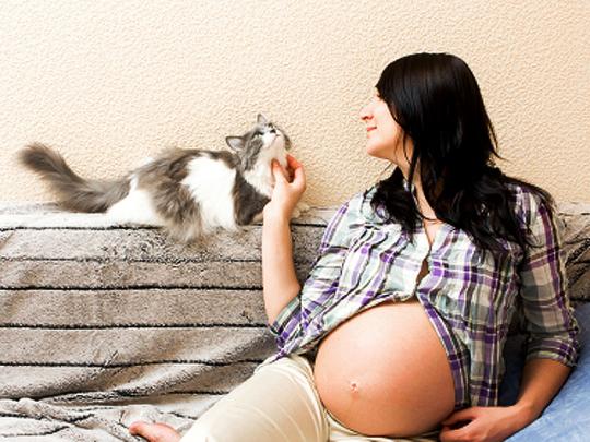 pregnant-woman-and-cat-Steve-Dale-toxoplasmosis-pregant-woman-cat